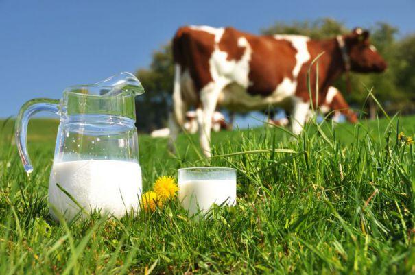 Olanda investește în dezvoltarea producţiei de lapte destinat procesării