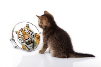 Pisica la oglidă