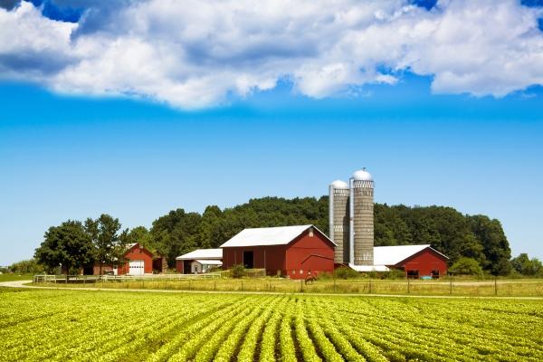 Poliţa MicroFERMIER – o asigurare adaptată agricultorilor care lucrează terenuri cu suprafeţe mici, de până la 50 ha